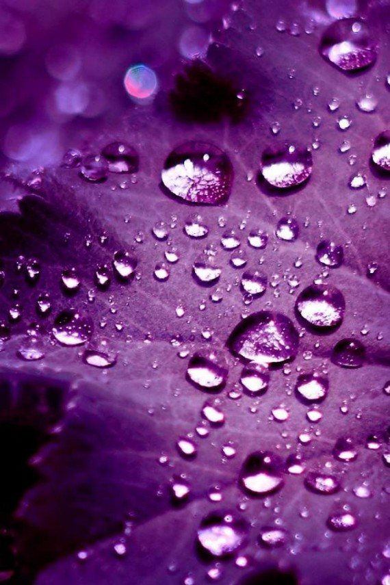 iPhone 4 Wallpaper   Aurora Dew Drop Latest Mobile Phones Watches 570x855