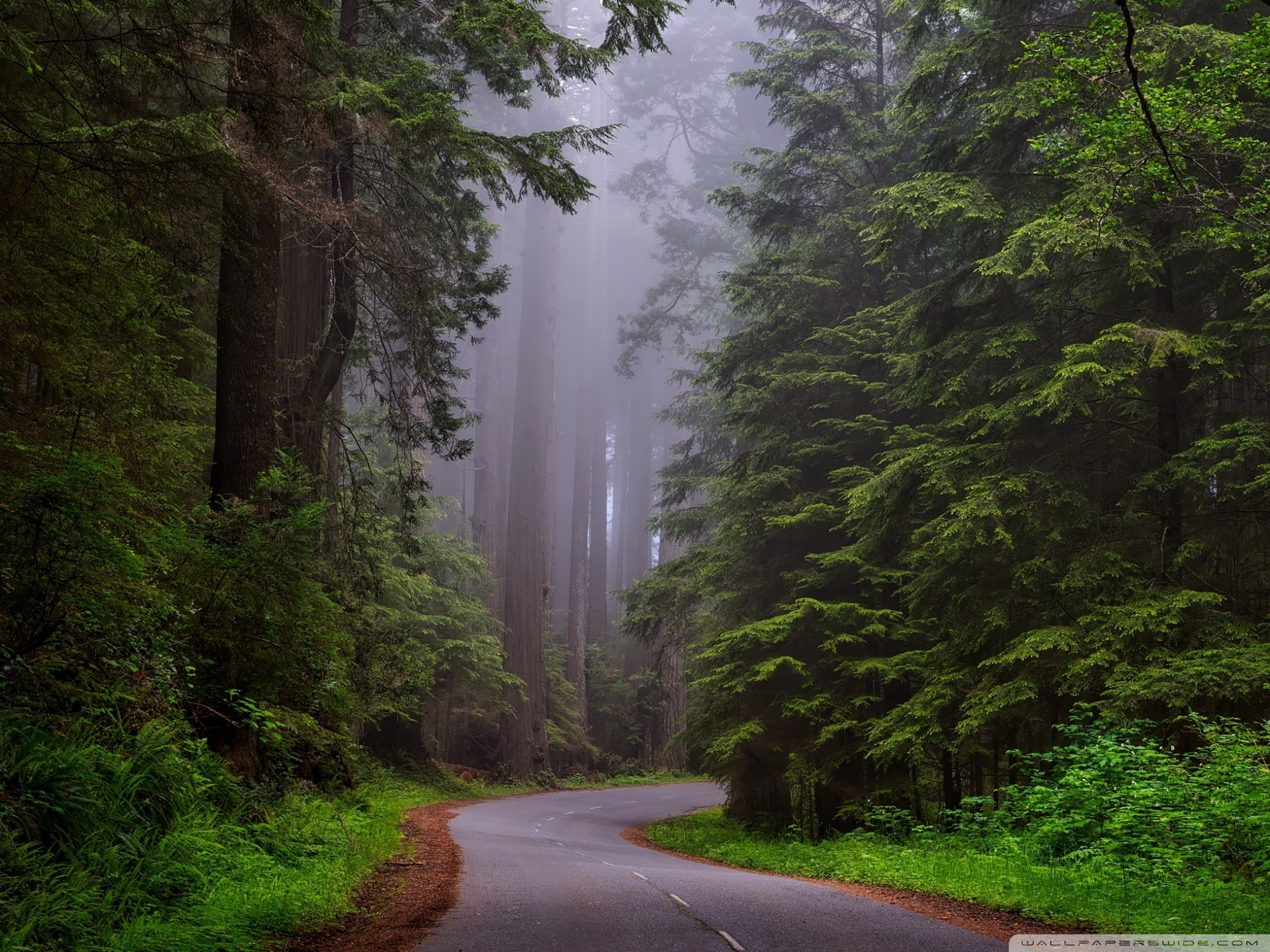Redwood National Park California 4K HD Desktop Wallpaper for 1920x1440