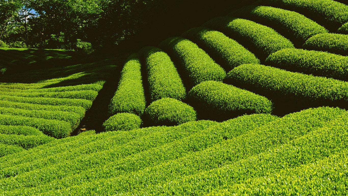Green Nature Farm Screensaver HD Wallpaper for Desktop Background 1366x768