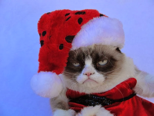 Top HD Wallpapers Grumpy cat christmas wallpapers 2013 625x468