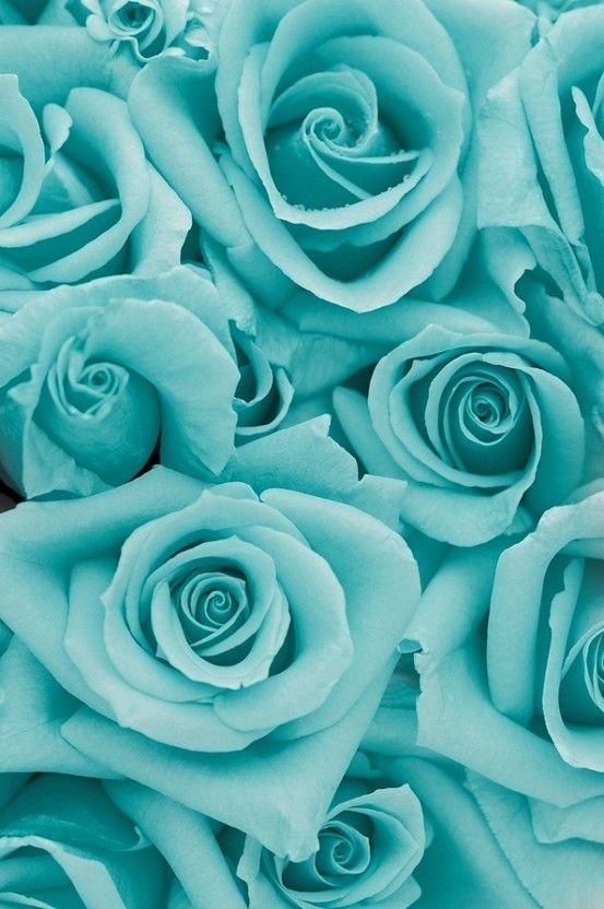 turquoise aqua iphone wallpaper tiffany blue aqua turquoise aqua roses 553x832