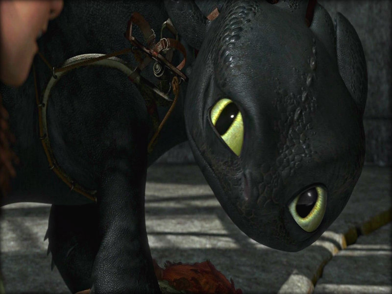 Toothless   Toothless the Dragon Wallpaper 33005424 800x600