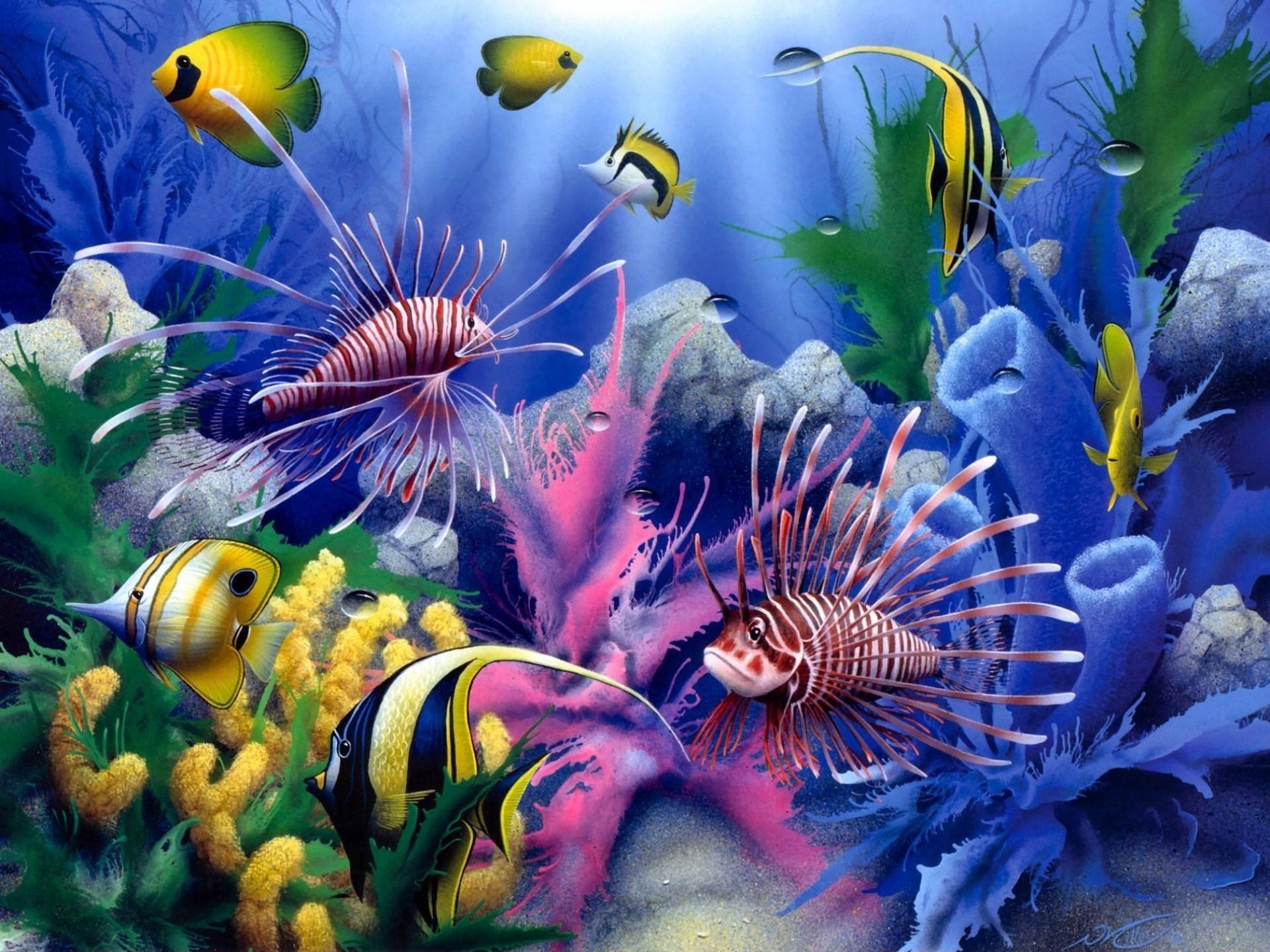color underwater coral reef ocean sea sunlight wallpaper background 1920x1440