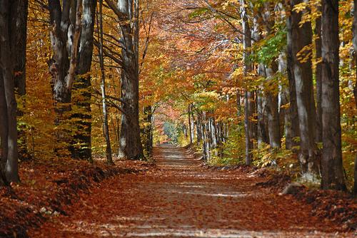 Cool Fall Backgrounds - WallpaperSafari