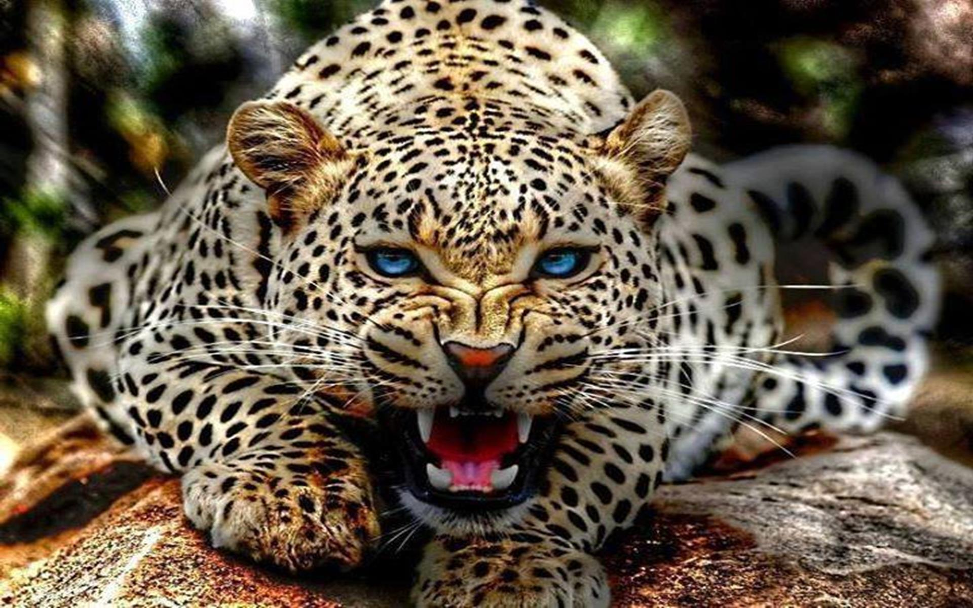blue cheetah wallpaper wallpapersafari leopard print vector pattern snow leopard print vector
