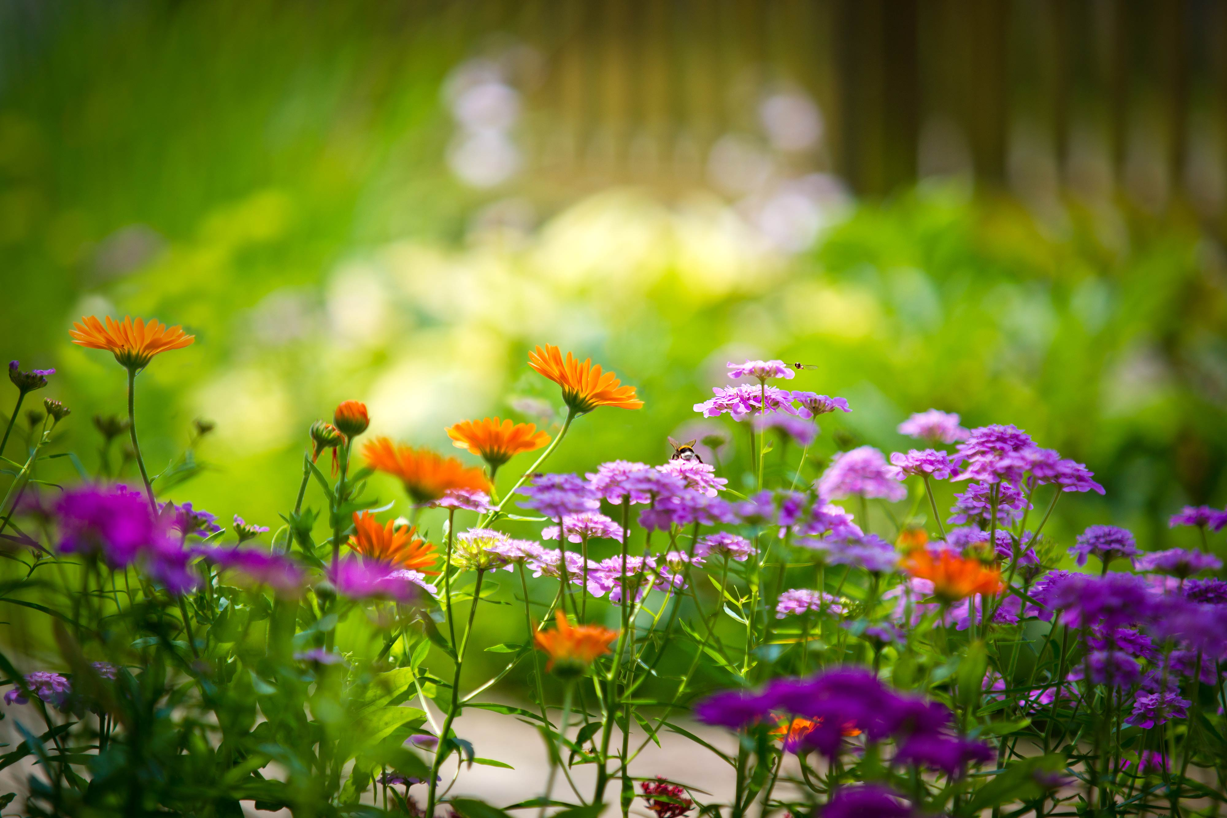 Flowers Beautiful 4K Wallpaper Desktop Backgrounds 4000x2667