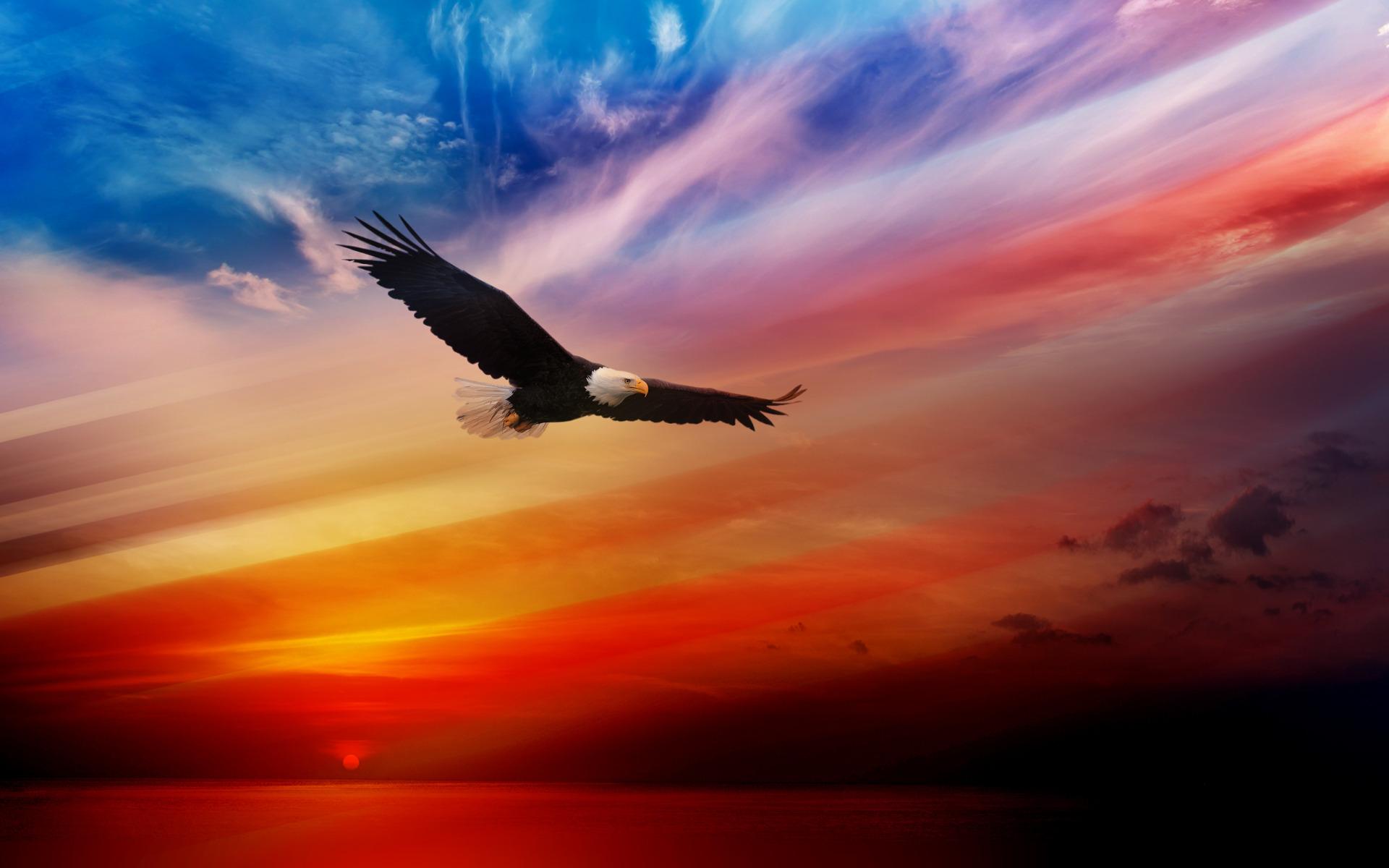 American Eagles Wallpaper 1920x1200