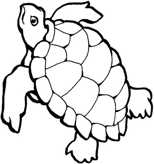wallpaper sea turtle sea turtle cartoon 540x576