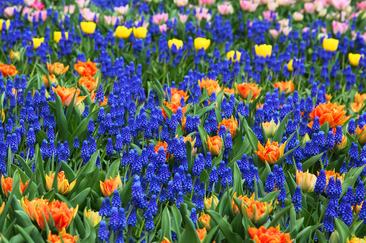 Free Colorful Flower Wallpaper Downloads: [67+] Colorful Flower Backgrounds On WallpaperSafari