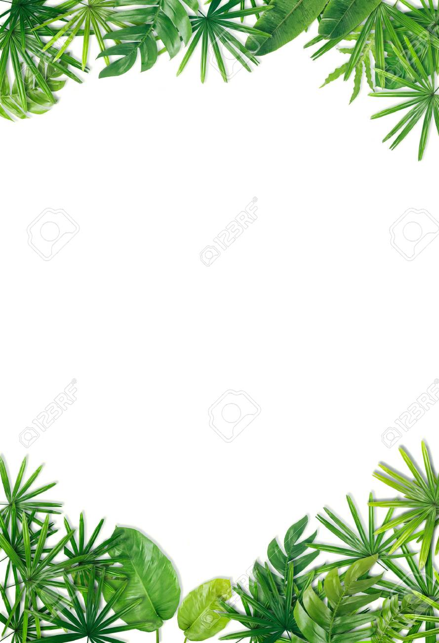 Green Leaf Border Background Stock Photo Picture And Royalty 889x1300