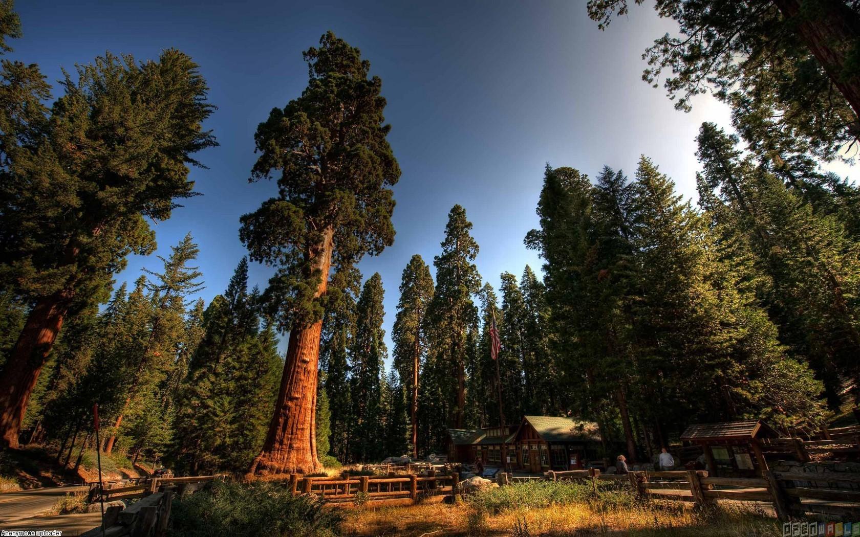 Sequoia national park wallpaper 21462   Open Walls 1680x1050
