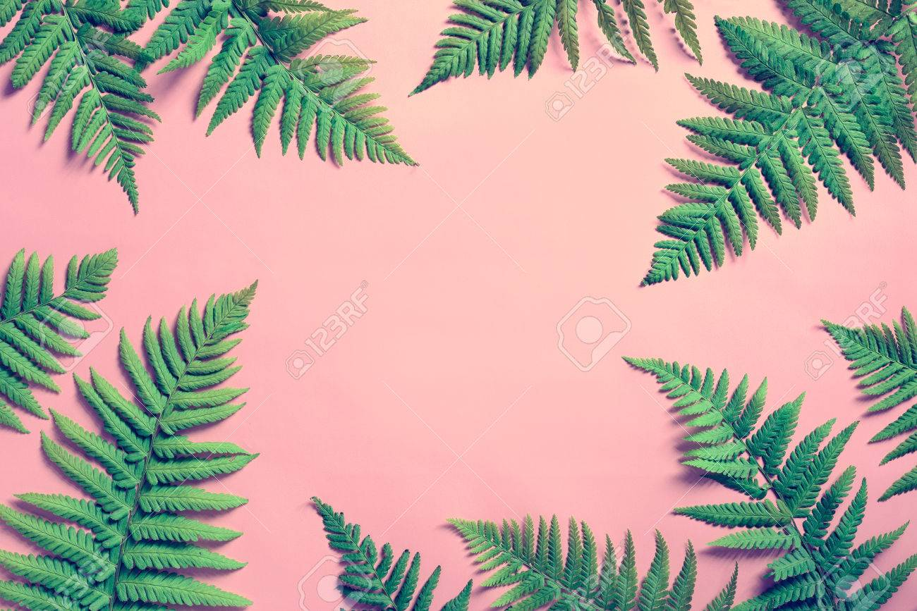 Tropical Summer Background Fern Leaves Set In The Frame Around 1300x867