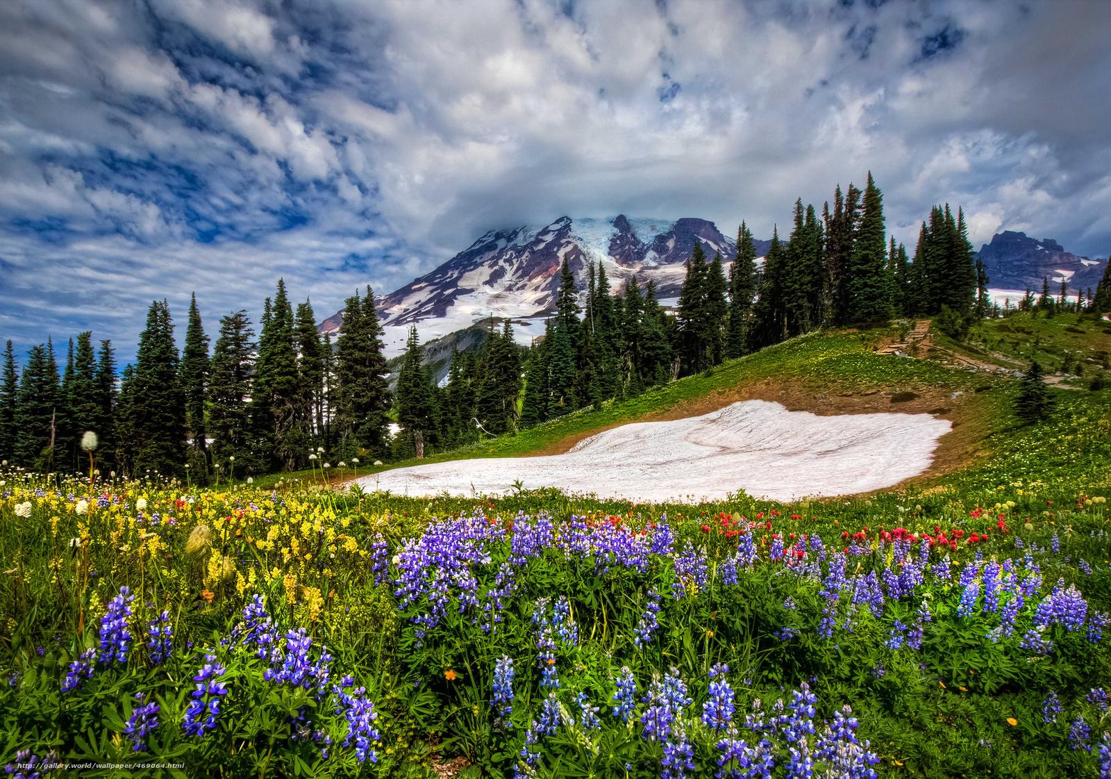 [42+] Mount Rainier Meadow Flowers Wallpaper On