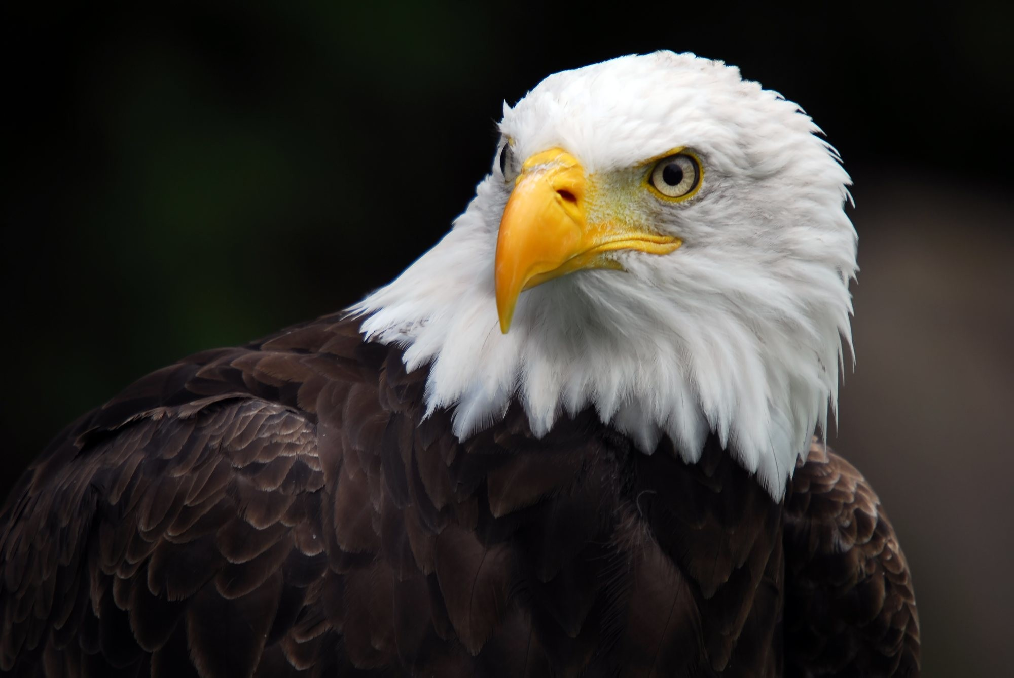 American Flag With Eagle Wallpaper 70 images 2000x1339