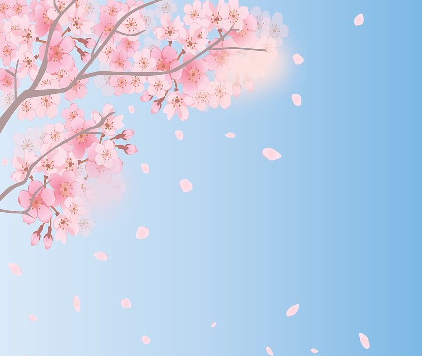 Spring Background Cherry Blossoms   image on Pixabay 855x720