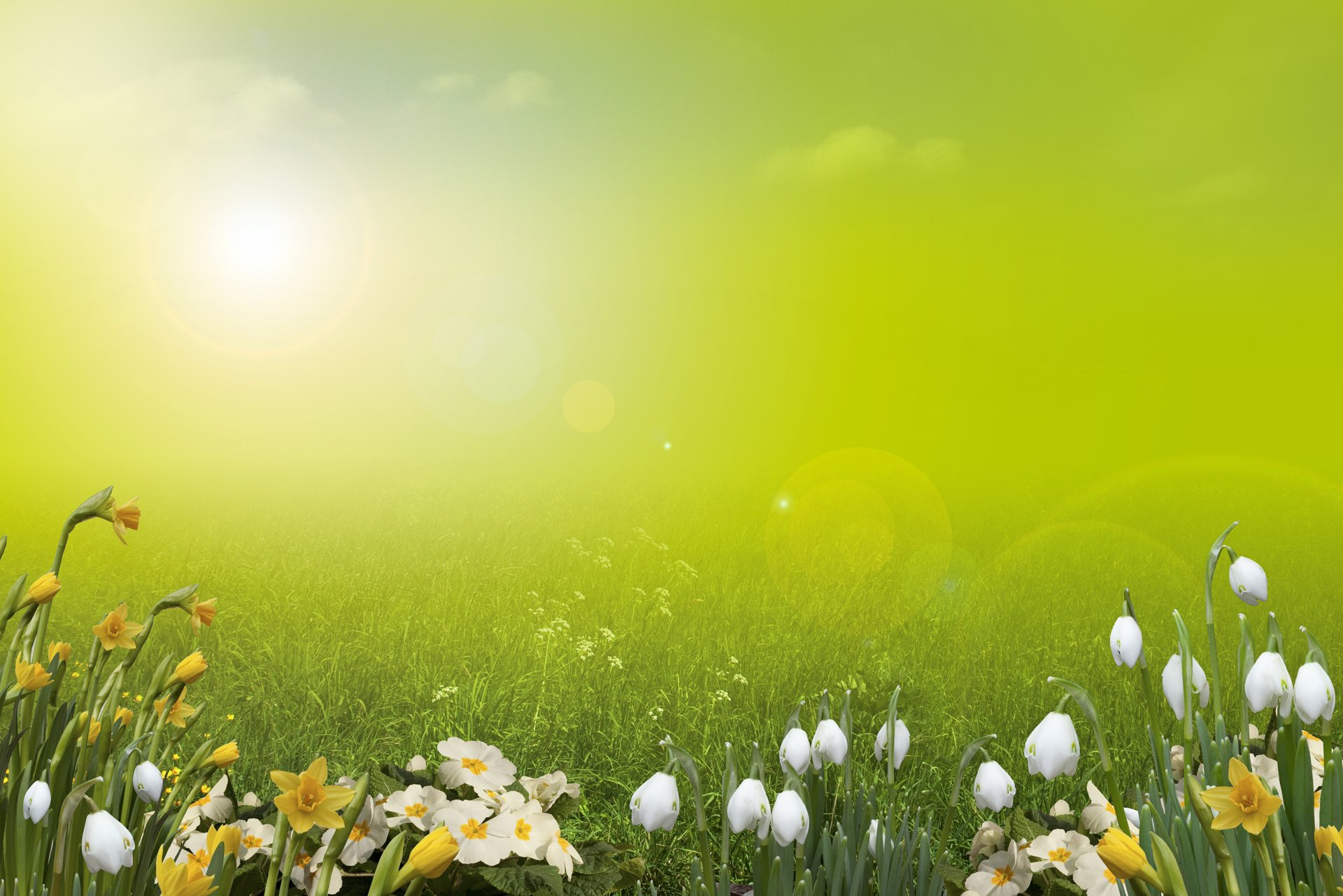 Spring background pictures free wallpapersafari - Backgrounds springtime ...