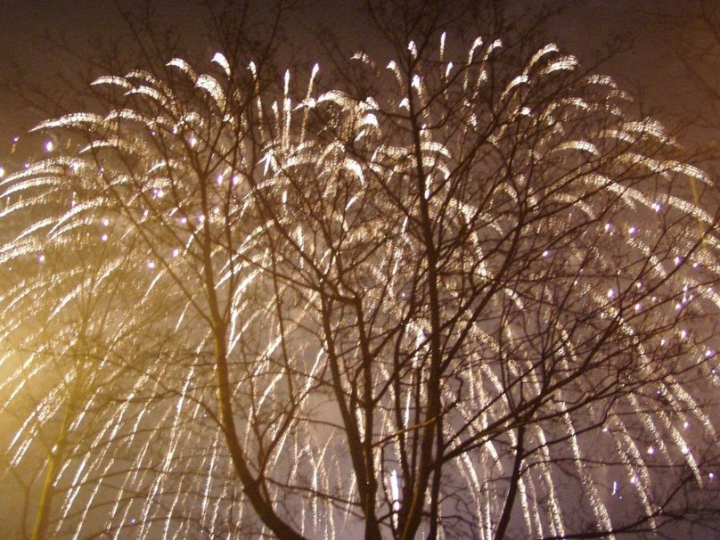Weeping Willow Fireworks wallpaper 808x606