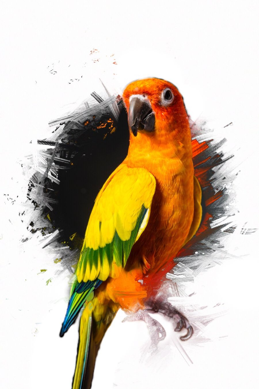Maverick the parrot ramdom Maverick logan paul Logang paul 900x1350