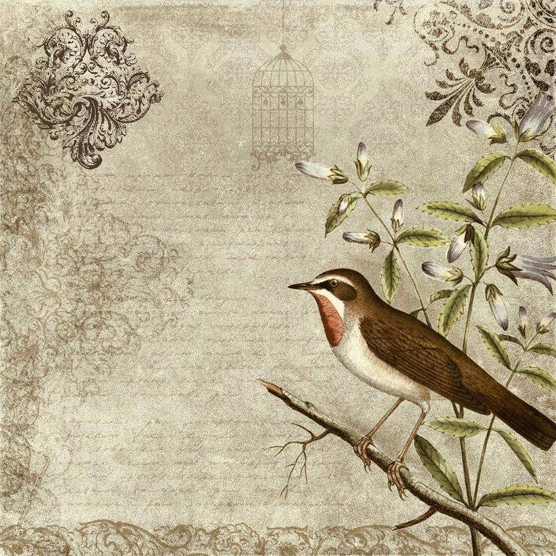 Birds Wallpaper Photos Vintage Bird Wallpaper 800x800