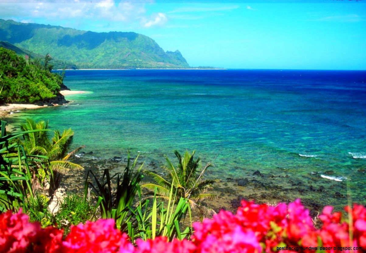 Desktop Wallpaper Hawaiian Beaches Best Background Wallpaper 1203x833
