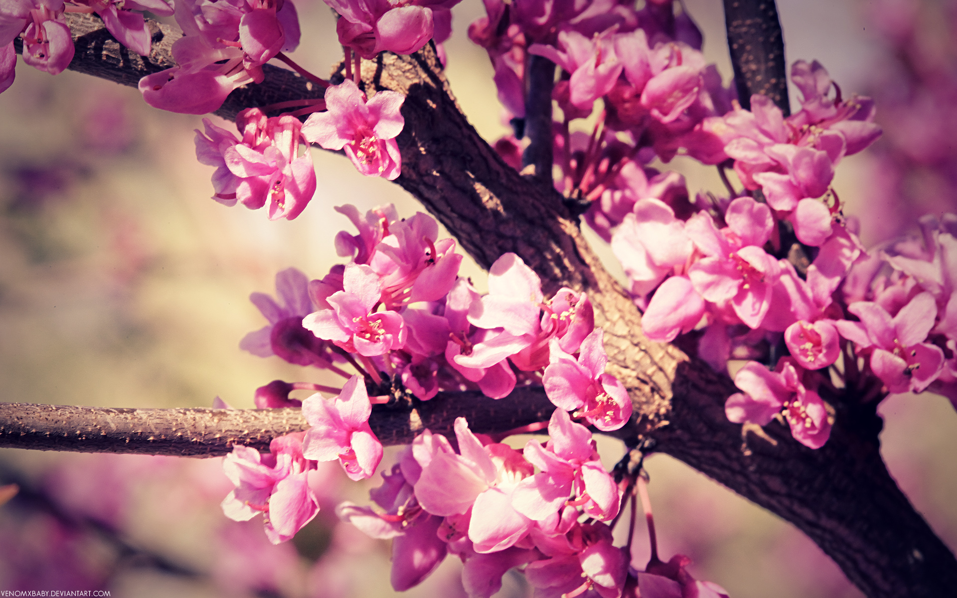 spring flowers wallpaper by venomxbaby customization wallpaper hdtv 1920x1200