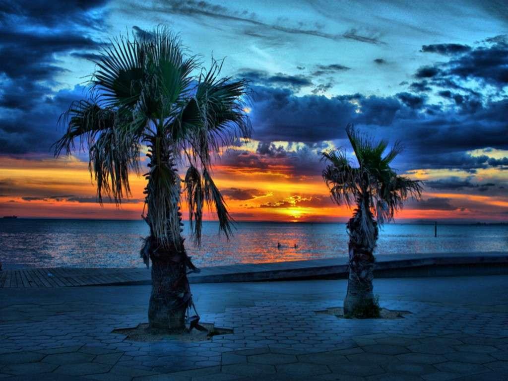 Goa Beach Parallax Hd Iphone Ipad Wallpaper: Palm Tree IPhone Wallpaper