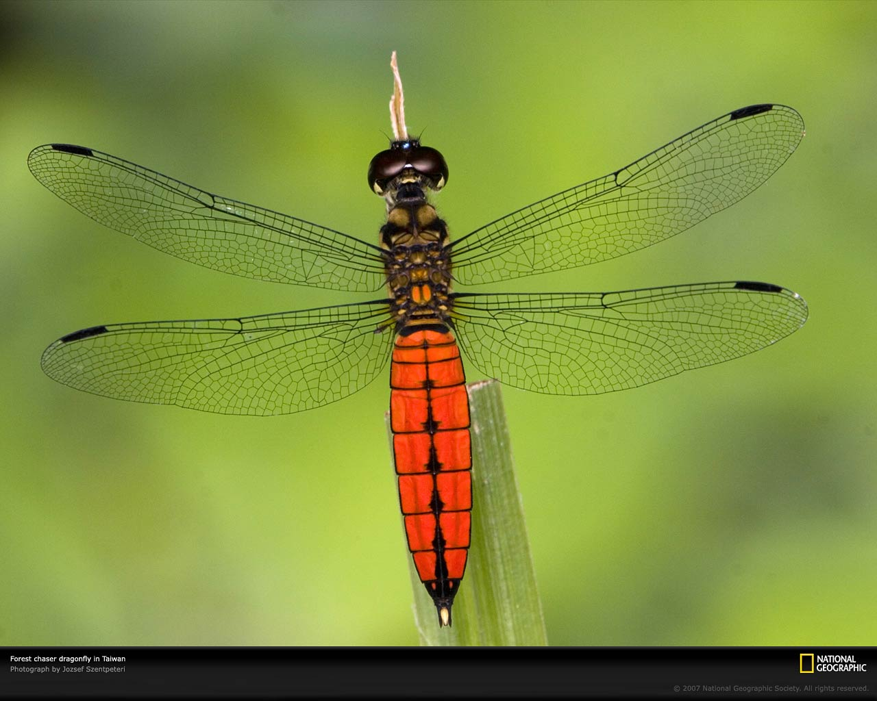 free Dragonfly wallpaper wallpapers download 1280x1024