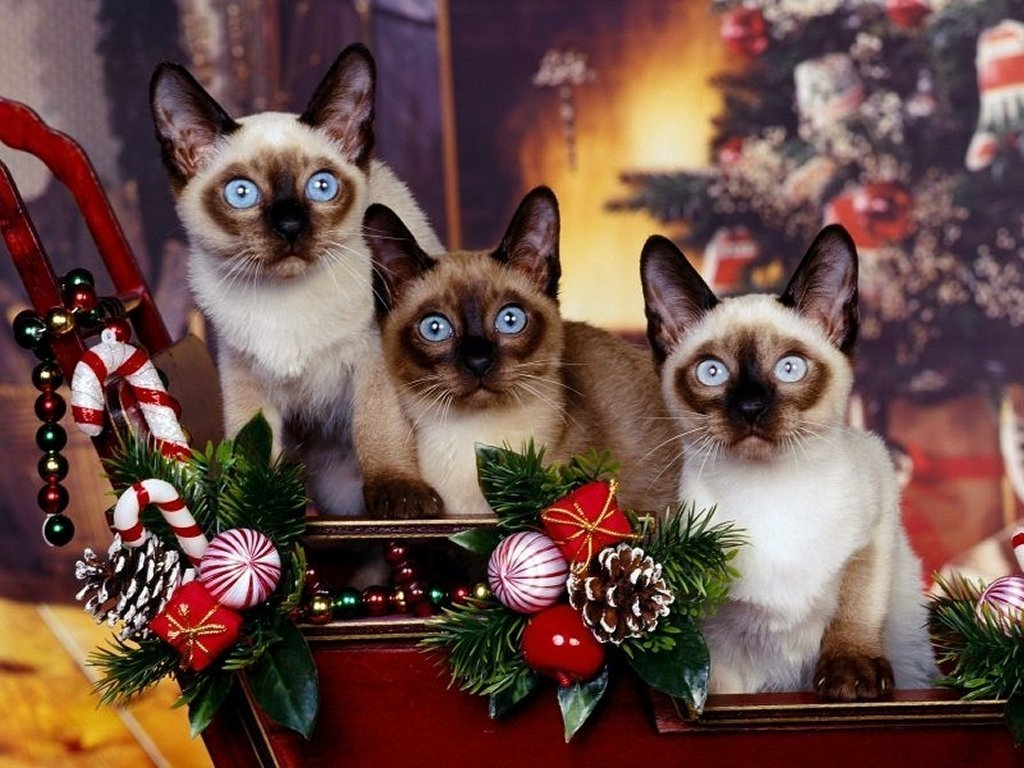Free Christmas Wallpaper with Cats - WallpaperSafari