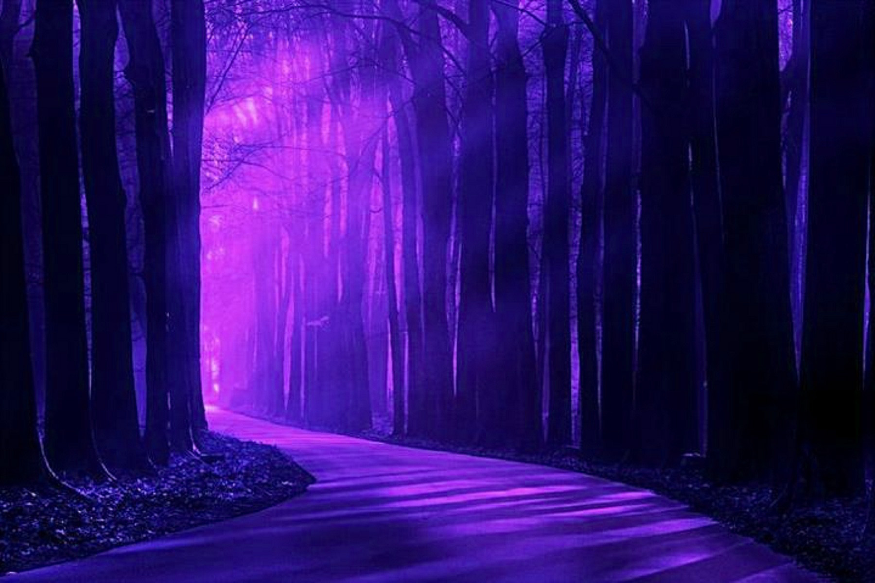 Purple Scenery Free Wallpaper Wallpapersafari