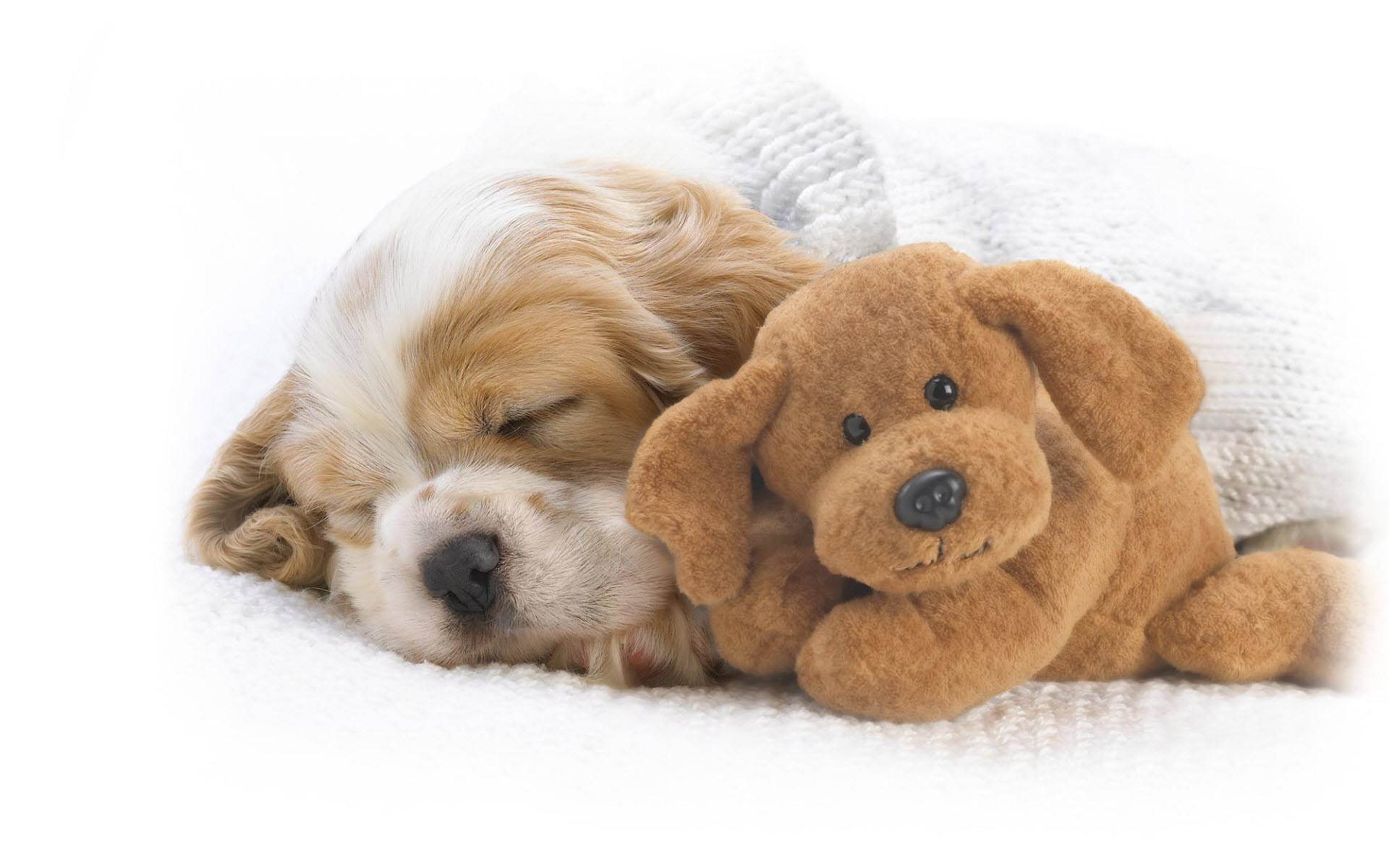 cute puppy wide wallpaper cute puppy is sleeping with a sweet toy 1920x1200