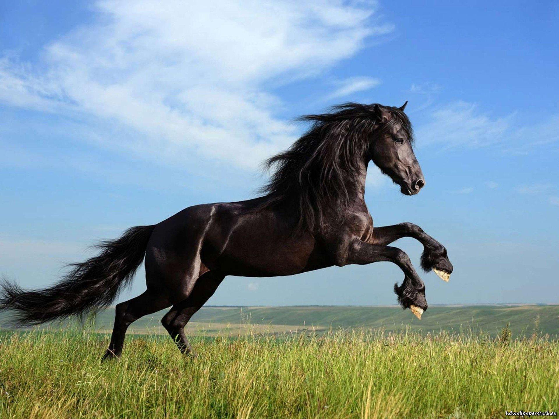 Horse Jumping Desktop Wallpaper wallpaper wallpaper hd background 1920x1440