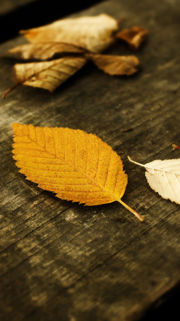 Autumn Yellow Leaves Wallpaper   iPhone Wallpapers 576x1024