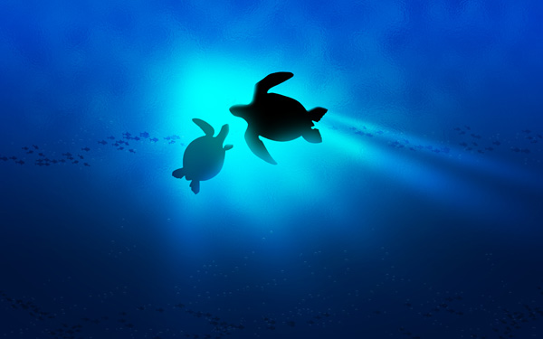 mom and baby turtle view bing baby turtle wallpaper 1280x1024 anilmal 600x375