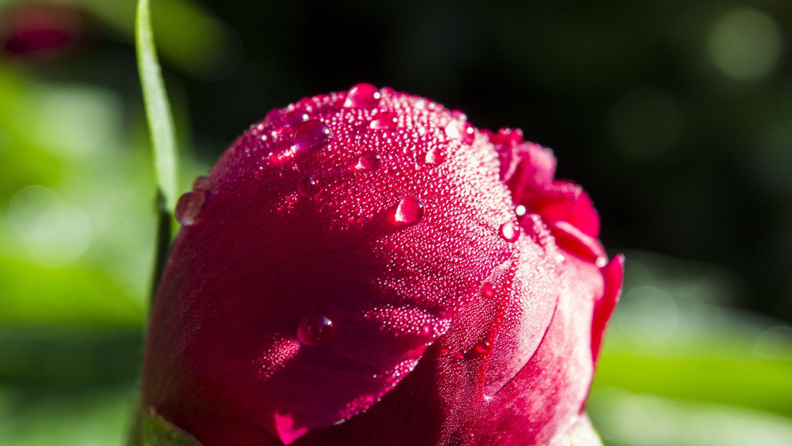 Free download Ultra HD Wallpaper flower 4K flower uhd ...