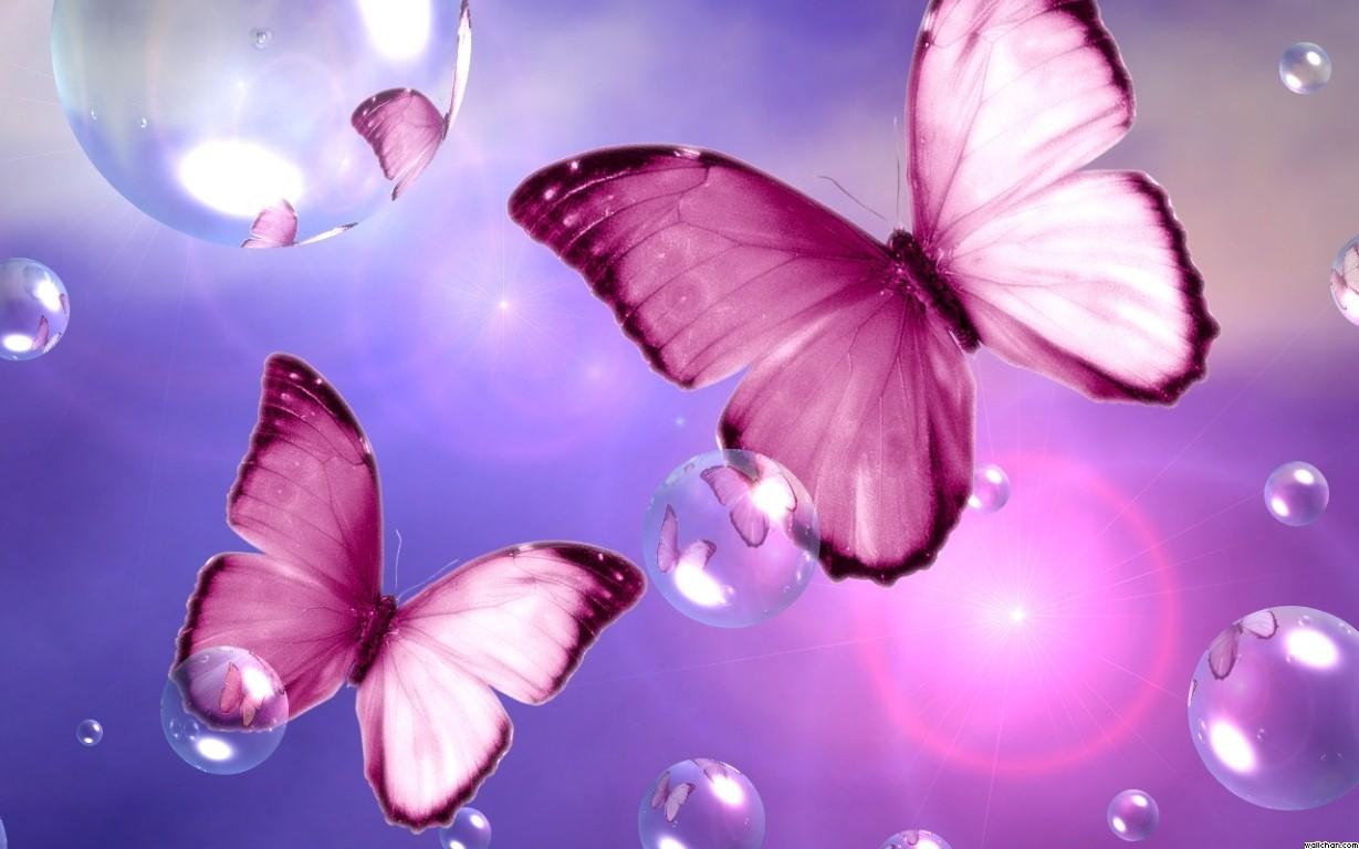 Beautiful Pink Butterfly Wallpaper   Pink Flower Wallpapers 1229x768