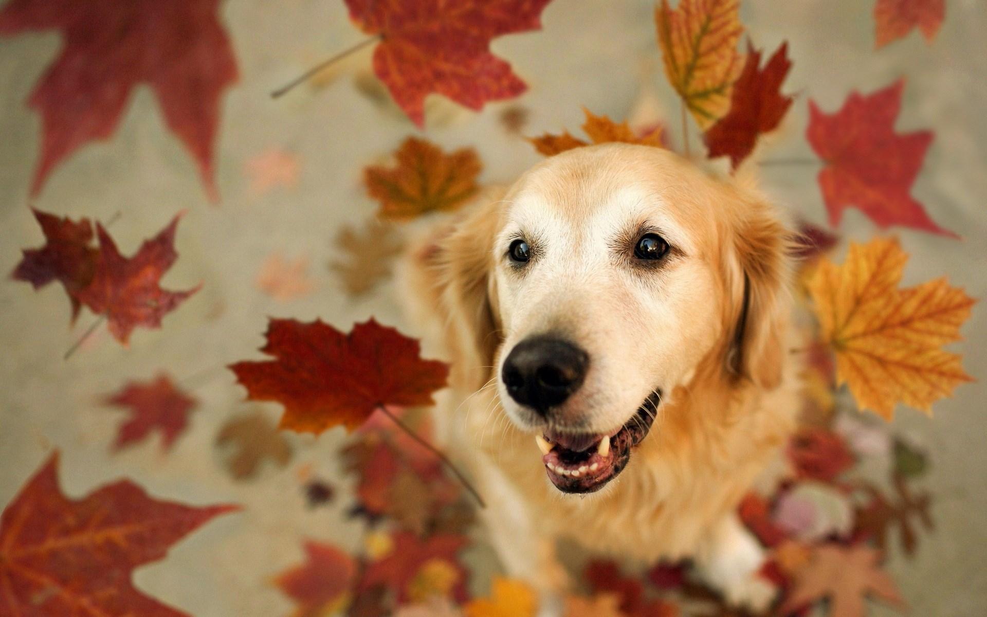 Dogs Autumn 1920x1200