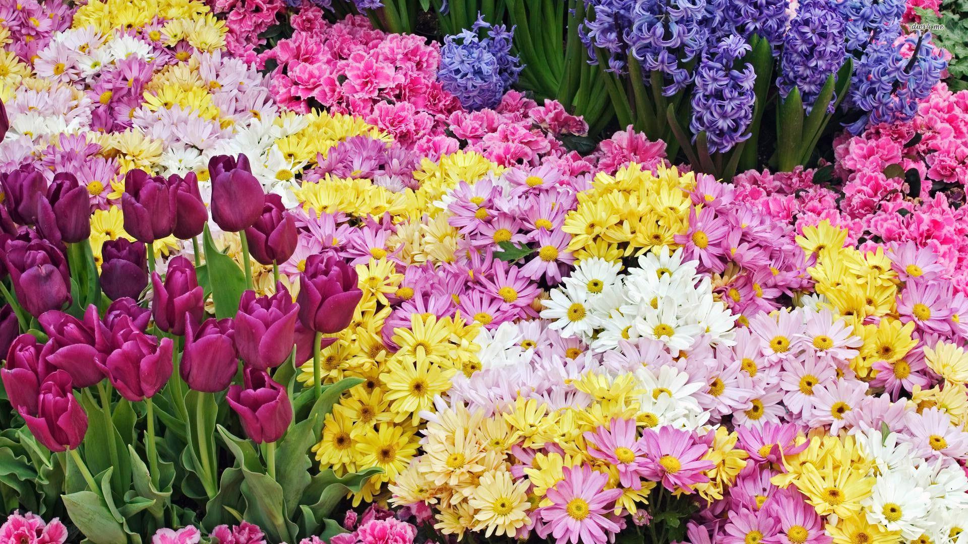 spring flowers desktop wallpaper 1920x1080
