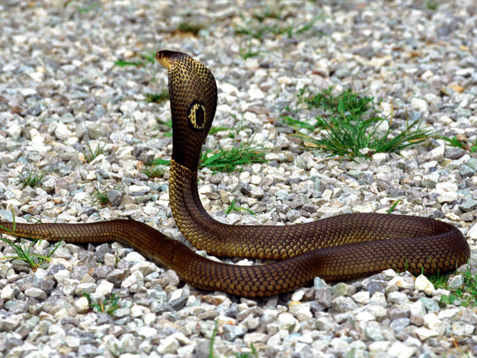 snake themes snake themes snake themes snake themes snake images snake 1600x1200