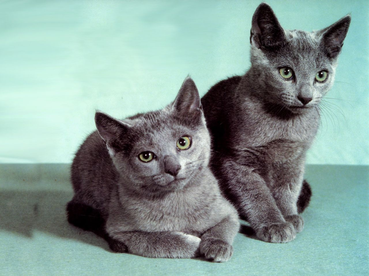 cats desktop wallpaper Animals wallpapers 1280x960