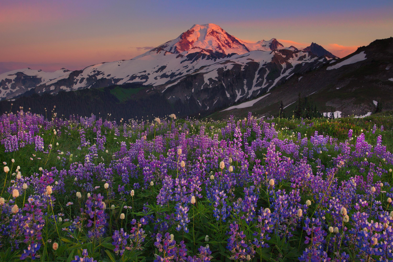 alpenglow Mount Baker Nature Mountain wallpaper Mountains 3000x2000