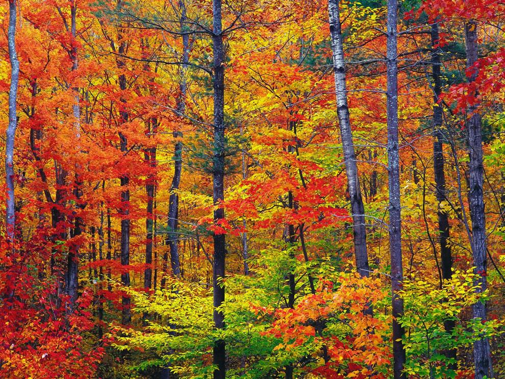 America the Beautiful in Autumn: Peak Fall Foliage Dates for 48 States ...