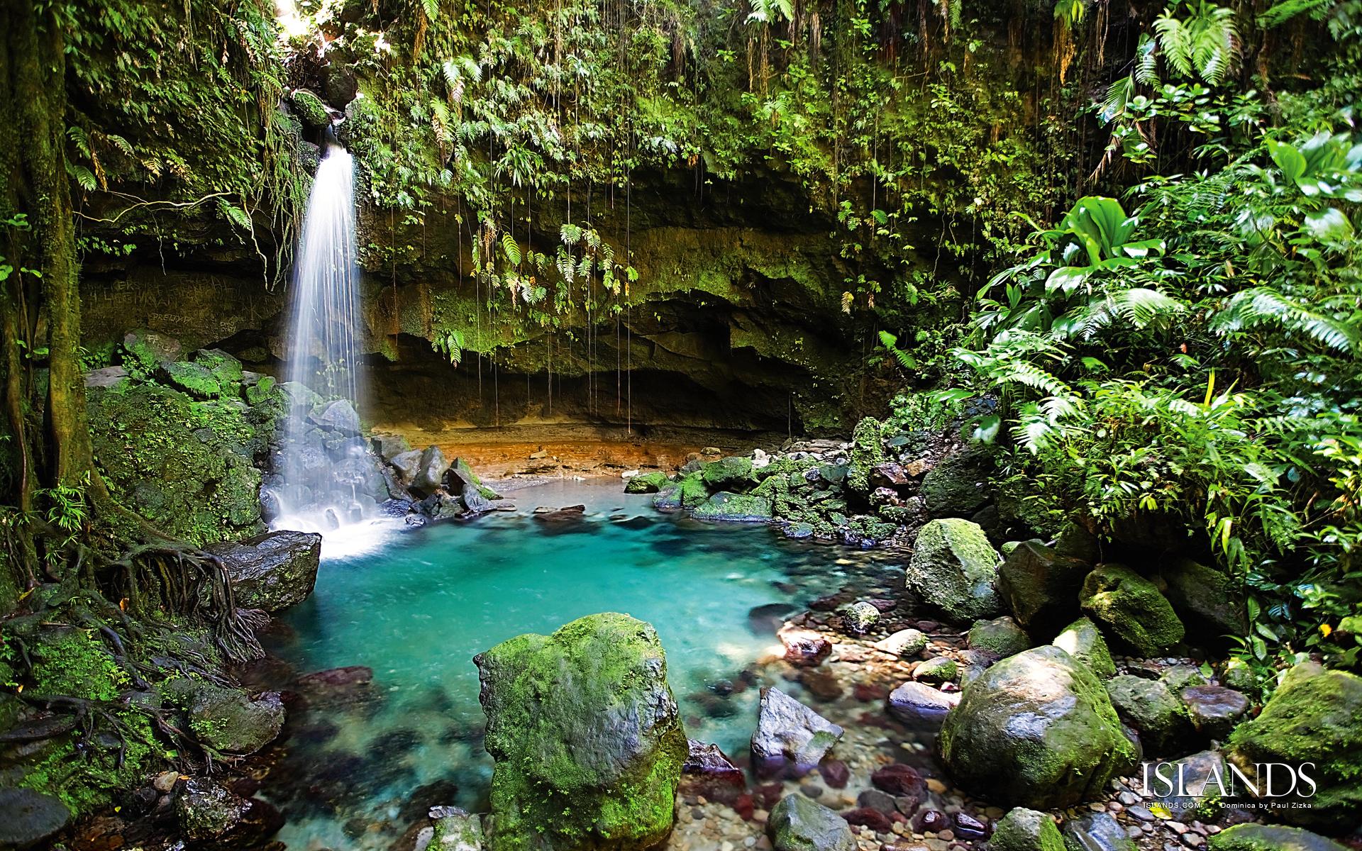 Tropical Rainforest Wallpaper - WallpaperSafari