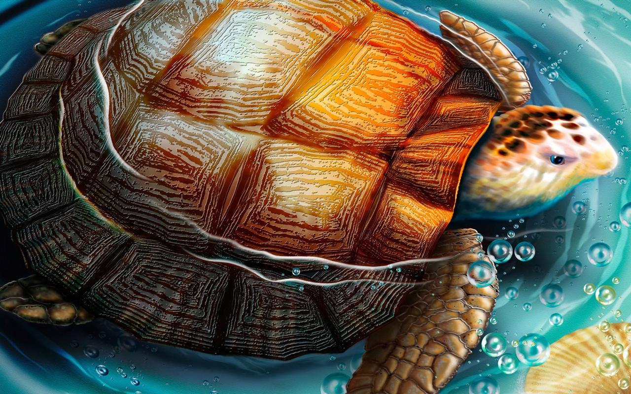 Turtle Wallpaper Desktop 1280x800