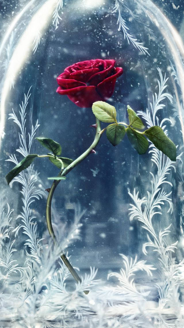 Wallpaper Beauty and the Beast glass rose best movies Movies 640x1138
