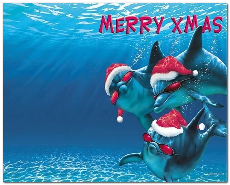 Here are some of the Best Christmas Animals Wallpapers which you can 771x621