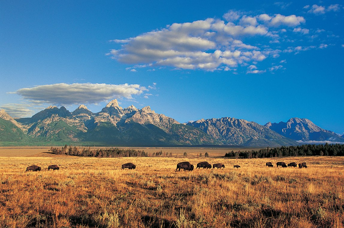 Free download jackson hole wyoming trail map guide wyoming ...