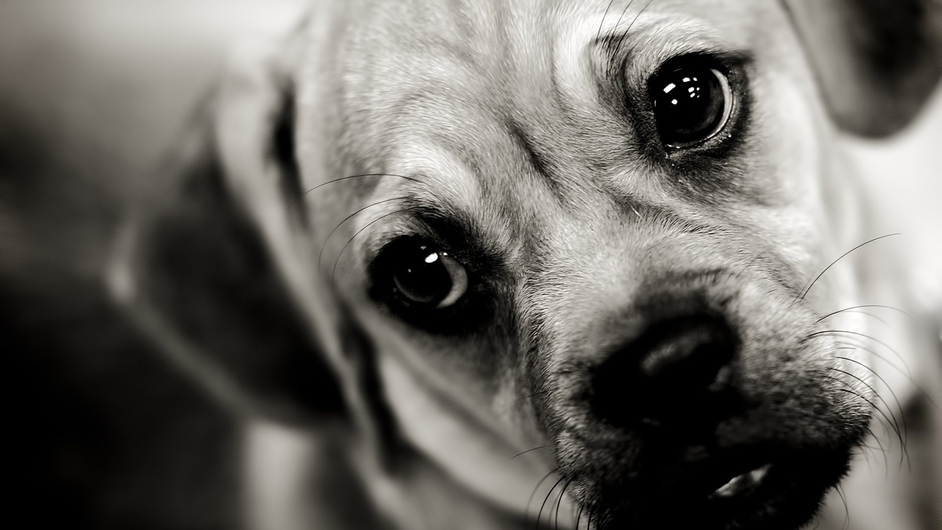 Dog HD Wallpapers 1920x1080 - WallpaperSafari