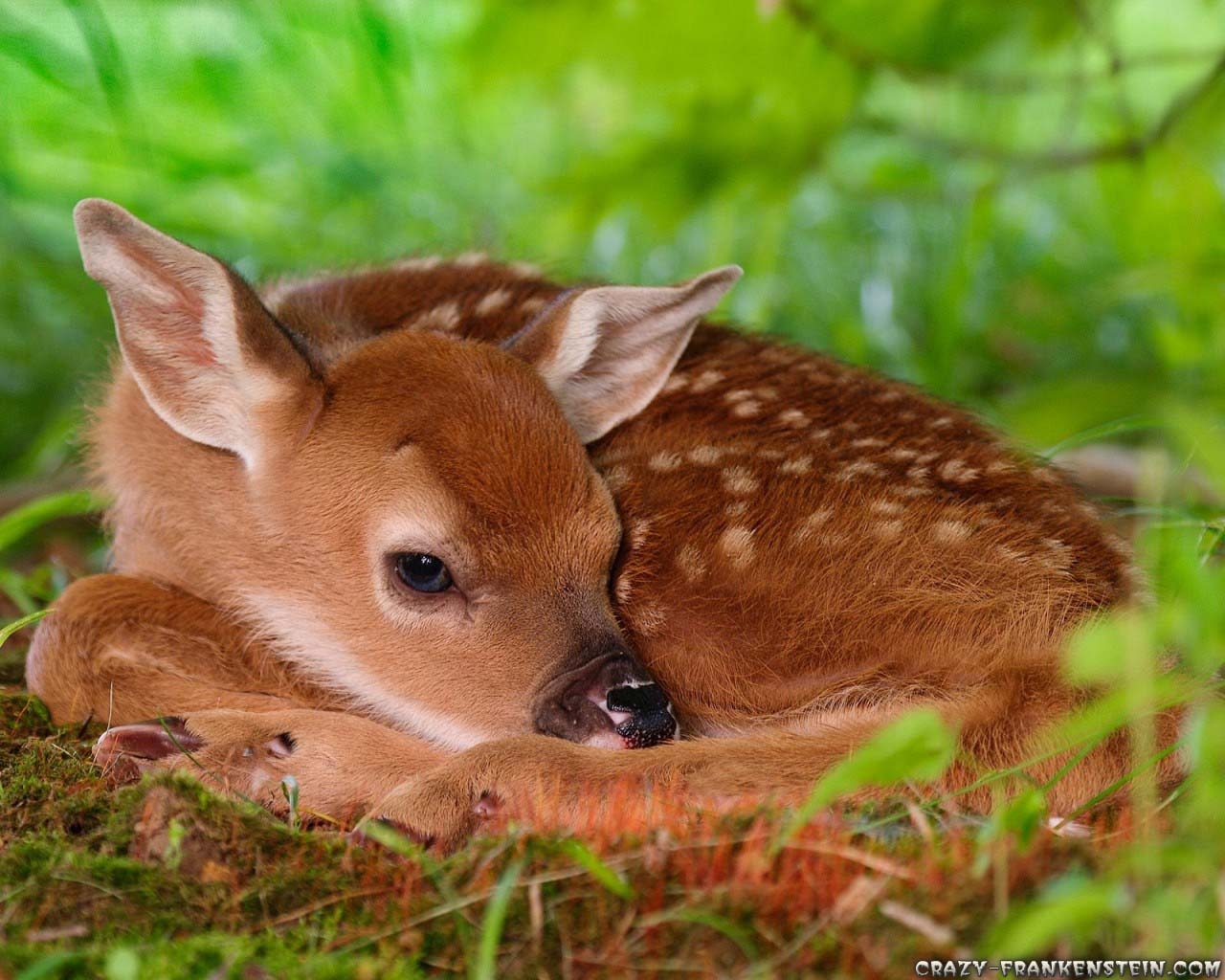 Download Deer Wallpapers Beautifull Hd Wallpaper 1280x1024