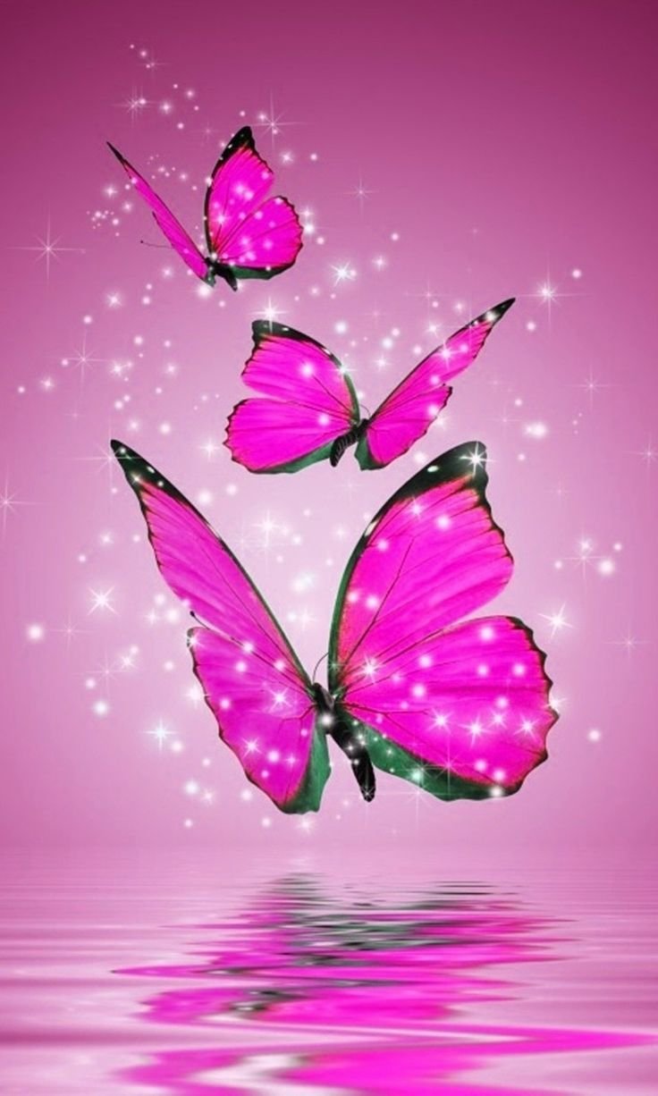pink and black butterfly wallpapers Currently 2505 1 2 3 4 5 736x1226