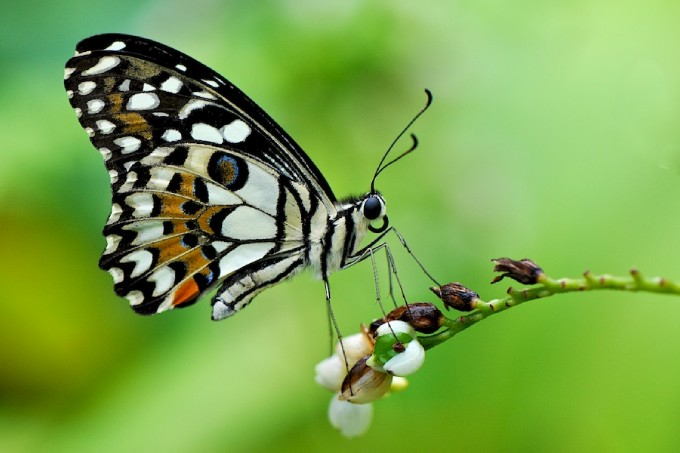 Cool Butterfly HD wallpapers Part I Cool Wallpapers 680x453